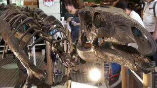 [VIDEO] The 2013 Great Dinosaur Expo in Marunouchi