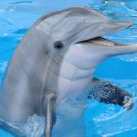 Dolphins show memory of 20 years plus, longest in the animal world
