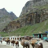 A caravan of horses just past Rohtang La. | LESLEY DOWNER