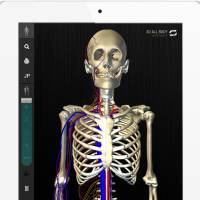 Skin and bones: The teamLabBody app was created using the Unity game engine, which has significantly evened the playing field for video-game and 3-D interactive app creators. | TEAMLABBODY