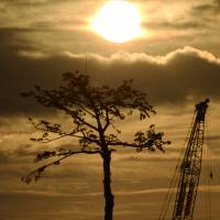 Special measures: The preserved 'miracle pine' that withstood the March 2011 tsunami is seen in silhouette against the sunrise in Rikuzentakata, Iwate Prefecture, early Wednesday, the 30-month anniversary of the Tohoku catastrophe. | KYODO