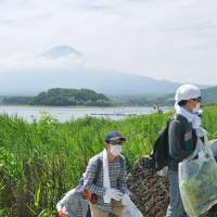 Hands-on effort: Volunteers and members of the Fujisan Club try to rid the area of bur cucumbers, an invasive foreign species, on Aug. 17 along the shores of Lake Kawaguchi in Fujikawaguchiko, Yamanashi Prefecture. | KYODO