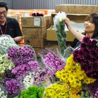 Imports of chrysanthemums for adorning graves reach fever pitch