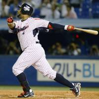 Don't stop: Wladimir Balentien watches his Japanese baseball record-tying 55th home run of the season clear the wall in right field during Tokyo Yakult's 6-2 loss to the Carp on Wednesday night. | KYODO