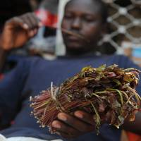 Jaw chaw: A man holds khat in Nairobi in July. Khat, or miraa, has been chewed for centuries in the Horn of Africa. | AFP-JIJI