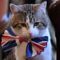 Cameron denies having claws out for Downing Street cat Larry