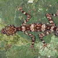'Lost world' in Australia yields new species