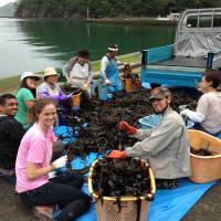 Local business: It's Not Just Mud volunteers help with the seaweed harvest in Funakoshi, a village outside Ishinomaki. | COURTESY OF IT'S NOT JUST MUD