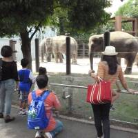 Hours extended: Tokyo Metropolitan Government-run Ueno Zoo is one of the facilities whose business hours will be extended this autumn. | KYODO