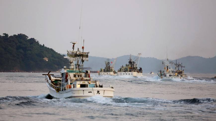 Finding a niche: Purse seiners, including the Ichimaru (foreground), head out from Nishinoshima in Shimane Prefecture on the evening of Sept. 10.