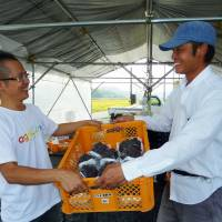 Know your grower: Takahisa Fujino (left), representative of a farmers' group called Agriinno Co. in Okayama Prefecture, receives grapes from a farmer in the town of Shoo in September to be supplied to customers of the Yasaibin website launched by Cookpad Inc. | KYODO