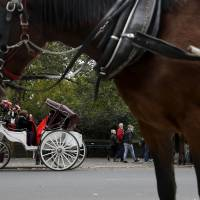 Saddle down: Horse-drawn carriages stand outside Central Park in New York last week | AP
