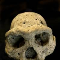 Early clue: This 1.8-million-year-old prehuman skull was found in 2005 in the village of Dmanisi, Georgia | AP