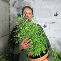 Uruguay stoked to legalize marijuana production
