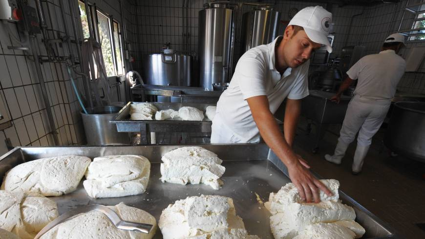 'The best': An employee picks up a slab of buffalo mozzarella at the Tenuta Vannulo farm in Italy.