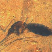 Mosquito fossil with blood-filled belly discovered