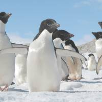 Antarctic researchers focus on penguin poo