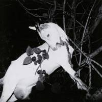 Caught on 6x6: A bound goat at Ginzan Onsen Yamagata, from Issei Suda's 'Fushi Kaden' (1976) | COURTESY OF THE COLLECTION OF TOKYO METROPOLITAN MUSEUM OF PHOTOGRAPHY