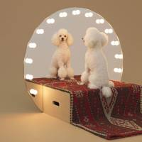 Love me, love my dog: 'Paramount,' a vanity stage for the toy poodle by Konstantin Grcic. | © HIROSHI YODA