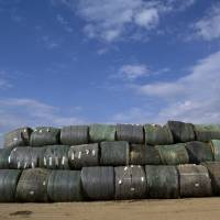 Basic ingredients: Bales of raw plant material for the production of ethanol lie in the stack yard next to Poet and DSM's manufacturing plant in Emmetsburg, Iowa. | THE WASHINGTON POST