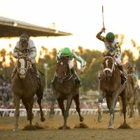 Crack the whip: Jockey Gary Stevens (right) rides Mucho Macho Man to victory in the Breeders' Cup Classic on Saturday | AP