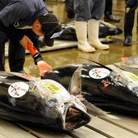 Fish fetish: A fish wholesaler checks tunas before an auction at the Tsukiji fish market in Tokyo last month | SATOKO KAWASAKI