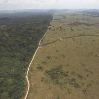 Amazon deforestation in Brazil increases sharply, reversing progress