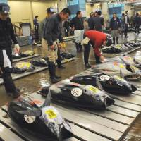 Curbs eyed for young Pacific bluefin tuna catch