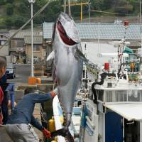 Quotas for bluefin catches left unchanged