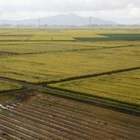 Protected, neglected: Rice paddies dot the city of Niigata in September | BLOOMBERG