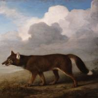 National heritage: This painting of a dingo by George Stubbs and his kangaroo painting are thought to be the first depictions of the animals in Western art. | AFP-JIJI