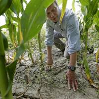 Climate battle: An environmentalist examines a cornfield near Ames, Iowa. Predictions of ethanol's benefits have proven so inaccurate that scientists question whether it will ever achieve its sole environmental goal — reducing greenhouse gases. | AP