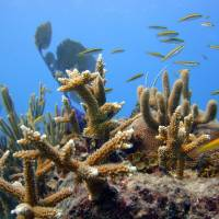 Seas at risk : A shoal of fish and healthy coral are seen off Punta Cana, the Dominican Republic. Scientists are concerned about ocean acidification, which endangers marine ecosystems. | AP