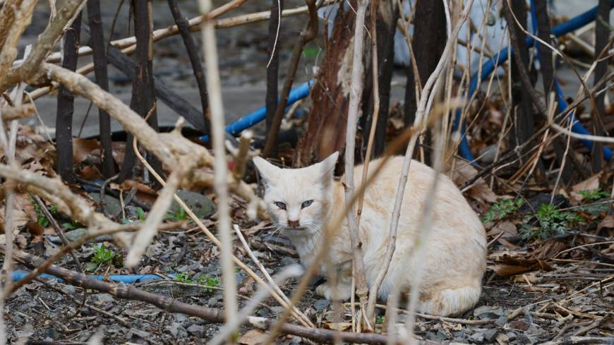 Survival of the fittest: The animals hardy enough to survive the harsh Tohoku winters do what comes naturally and breed, resulting in a sharp rise in feral cats and dogs in Fukushima.