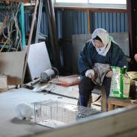 Left behind: An old lady who refused to evacuate Kawauchi village after 3/11 lives with her beloved cats and many more besides. | MAKOTO  YAMAMURA