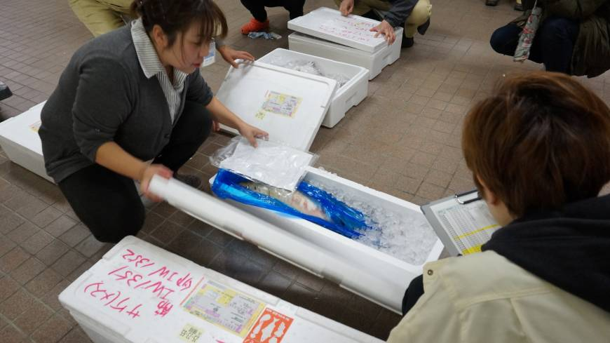 On ice: Fish to be checked for radiation are delivered to Marine Ecology Research Institute in Chiba Prefecture on the morning of Dec. 10.