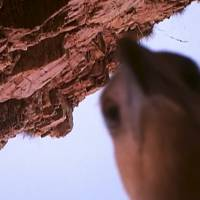 Bird steals camera, records journey