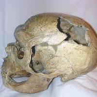 Neanderthals cared for elderly