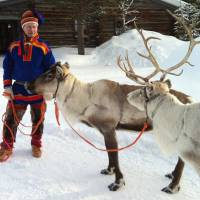 Treasured beasts: A Sami handler dressed in traditional clothing holds two animals from his herd in Saariselka, Finnish Lapland. | AP