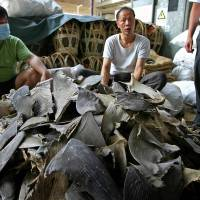 China bans shark fin soup at official banquets, other extravagances