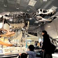 Big as life: Visitors look at dinosaur skeletons displayed at the National Museum of Nature and Science in Taito Ward, Tokyo, on Dec. 17. | KYODO
