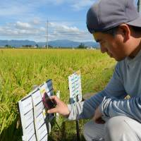 Digital farmhand: Yoichiro Nagai of Fukuhara Farm waves a smartphone over IC tags set up by rice paddies in Hikone, Shiga Prefecture, in September. | KYODO