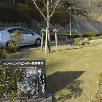 The Ending Center's jumokuso site in the cemetery features a cherry tree that serves as a marker for a number of burial lots owned by different families. | KYODO
