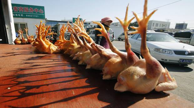 Bird flu spikes in China before Lunar New Year