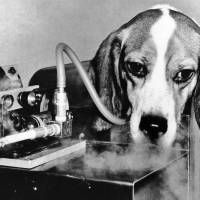 Animal experiment: A beagle smokes a cigarette via a machine linked to its windpipe by a plastic tube to test any link between smoking and emphysema at the Veterans Administration Hospital in East Orange, New Jersey, in November 1966. | AP