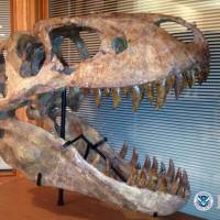 U.S. man guilty of smuggling fossils
