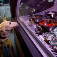 Germany's first restaurant for pets draws protests over 'decadence'
