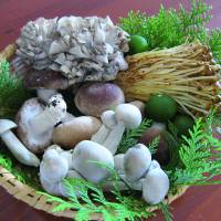 An array of Japanese mushrooms, in season in the fall.  | MAKIKO ITOH, MICHIKO EBINA