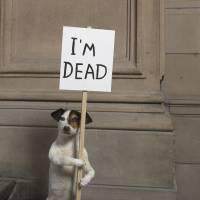 David Shrigley's 'I'm Dead' Collection Hamilton Corporate Finance | © DAVID SHRIGLEY, COURTESY KELVINGROVE ART GALLERY AND MUSEUM