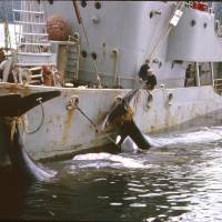 Japan: Why kill whales off Antarctica?